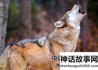 草原狼的传说故事