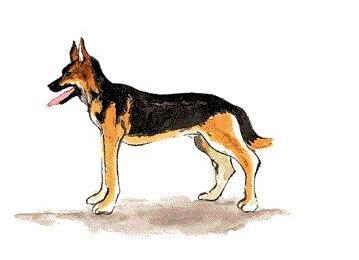 十二生肖狗的故事