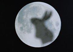 关于玉兔望月的神话故事